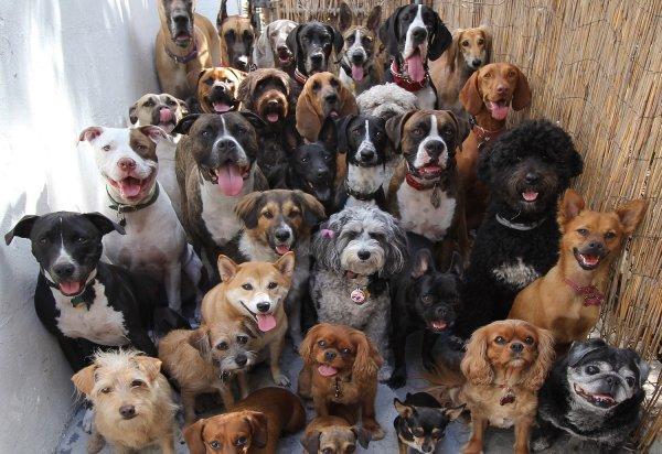 В Люблино местная жительница держала в квартире 40 собак