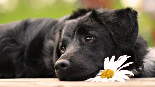 В Кусе живодер поиздевался над чужим псом