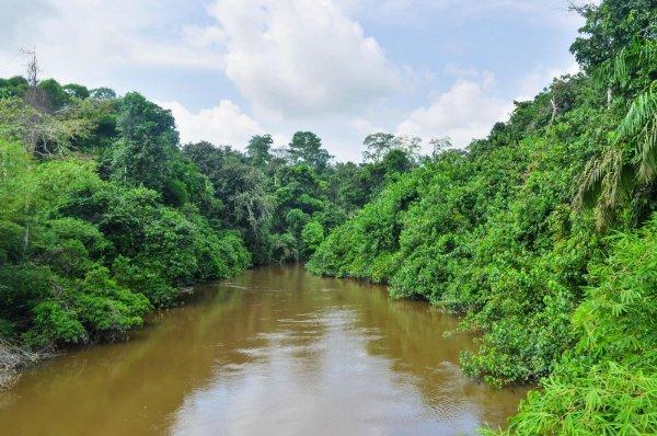 В Конго 50 человек погибли в результате крушения лодки