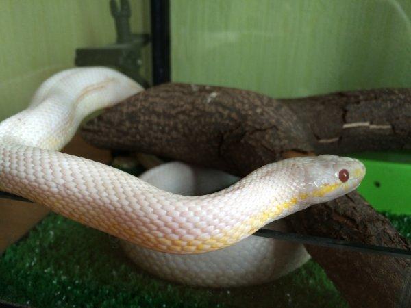 «Приятного аппетита!»: Англичанин нашел огромную змею в коробке с хлопьями