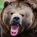 По улицам Новокузнецка бродил медведь