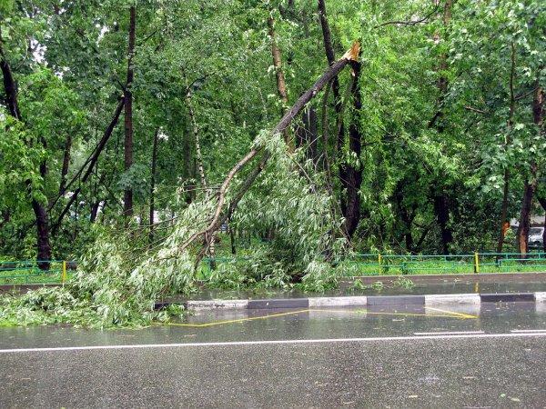 Апокалипсис в Ульяновске: Ураган повалил десятки деревьев, повредил газопровод и автомобили