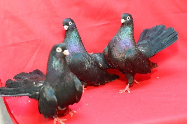 Сотрудники белгородской границы вернули на Украину живых раков и голубей