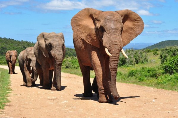 Слон напал на плавающих по реке туристов в Ботсване