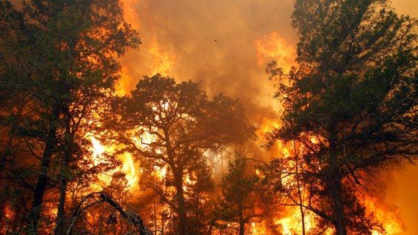 Житель Забайкалья захотел увидеть горящий лес и поджег его