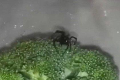 В США парень обнаружил черную вдову в брокколи из супермаркета