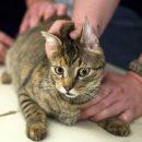 В Смоленской области домашний кот