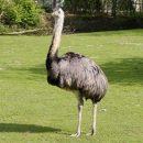 В казанском цирке страус атаковал зрителей