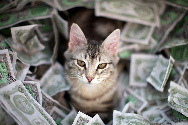 Британец своровал у своей фирмы деньги и купил породистых котят