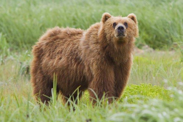 В Сочи сняли на камеру воспользовавшегося эскалатором медведя