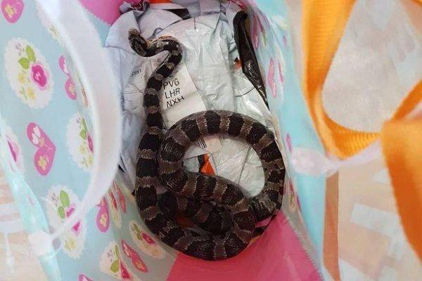 Странная клиентка швырнула в прачек живую змею