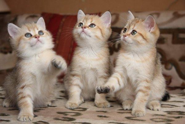 В Невинномысске маленькие садисты выкололи котятам глаза