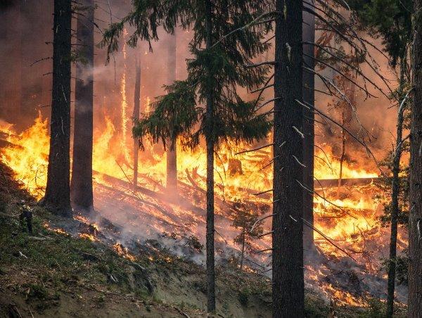 В Красноярском крае тушат пожар в Тунгусском заповеднике