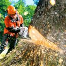 Профессиональное удаление деревьев