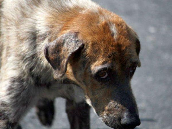 Во Владивостоке бродячий пес покусал 6-летнего мальчика