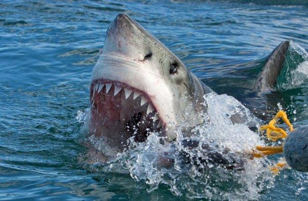 Акула утащила под воду кормившую её девушку