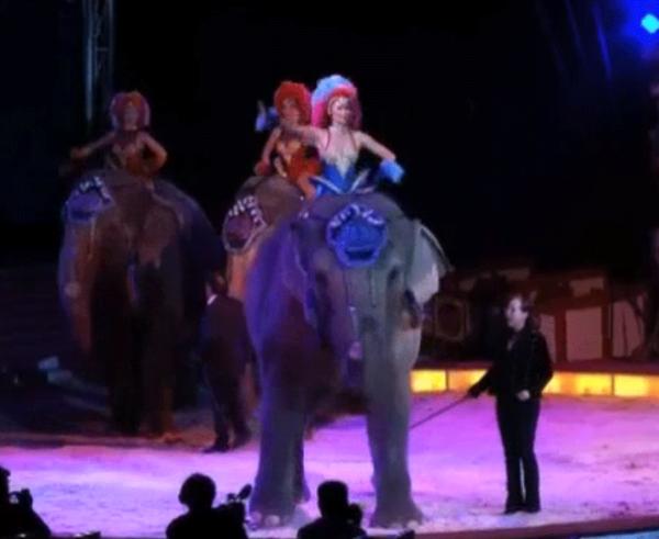 В Германии во время выступлений в цирке слон упал на зрителей