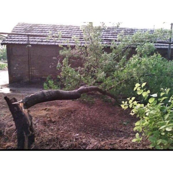 Поваливший деревья ураган в Светлограде местные жители сняли на видео