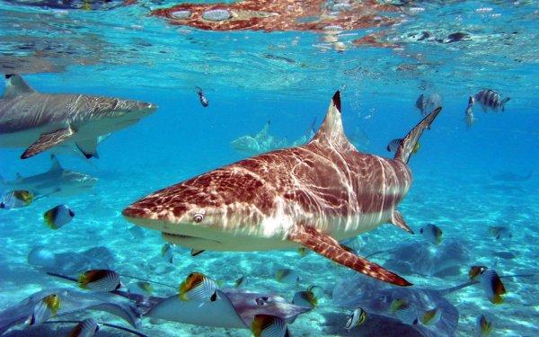 Жители Техаса стали свидетелями того, как 3-метровая акула ест большую черепаху