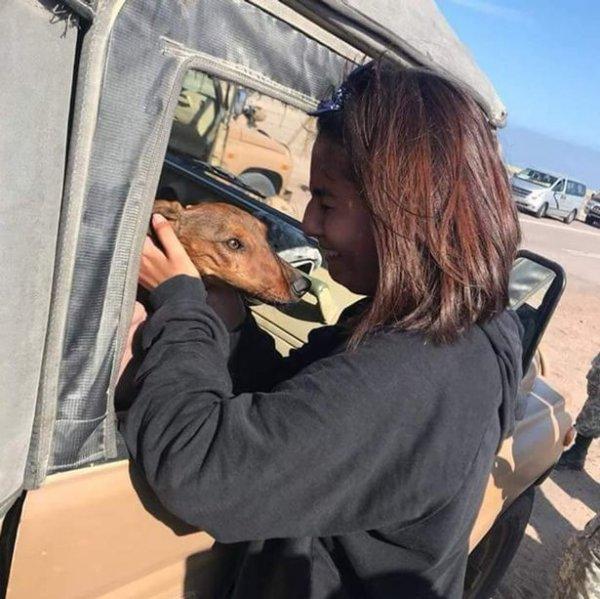 Такса выпала из самолета и выжила в пустыне в Чили
