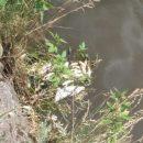 Эколог объяснил, почему в реке Миасс в Челябинске массово гибнет рыба