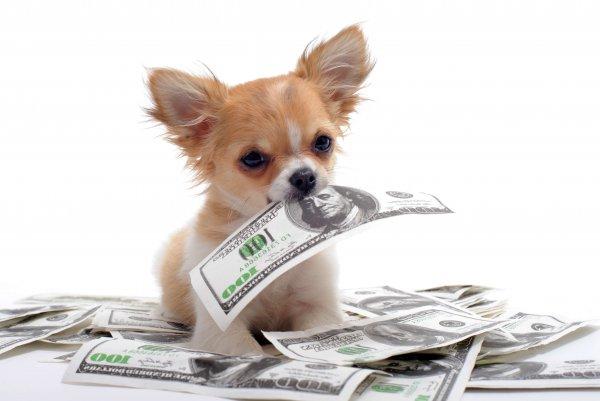 Муж выдрессировал пса воровать деньги у жены