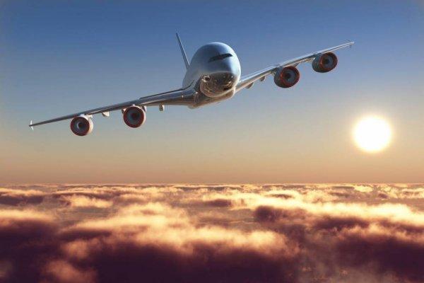 В Москве самолет совершил аварийную посадку из-за собаки