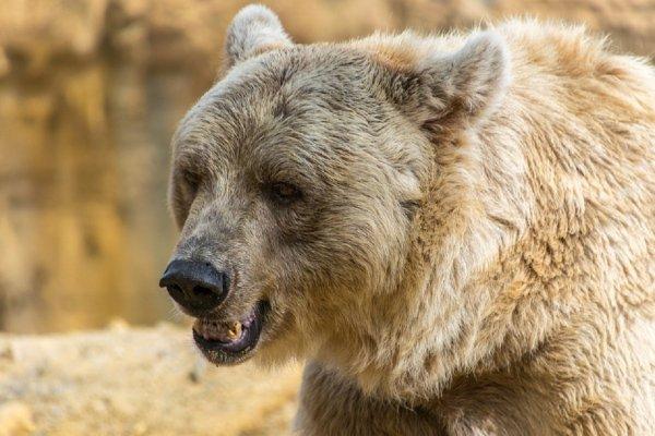 Медведь с зелеными глазами напал на людей, купающихся в озере после бани