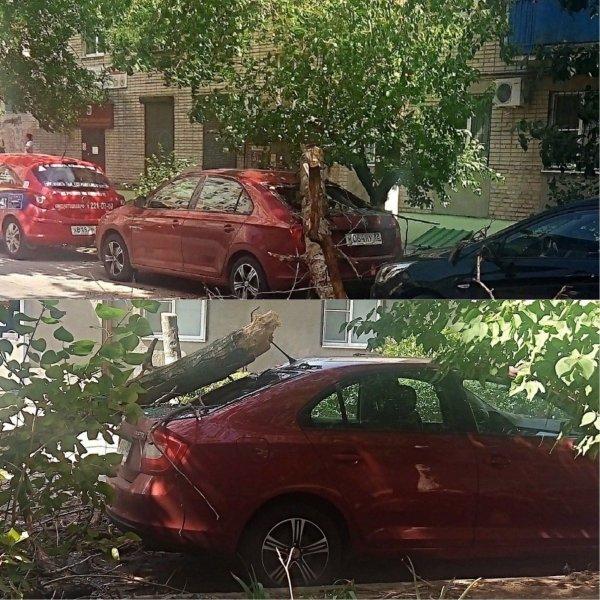 В Ростове на иномарку упало дерево