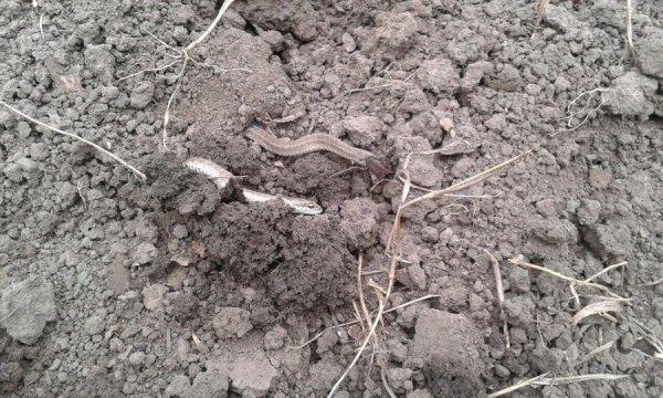 В Башкирии появилось большое количество ядовитых змей