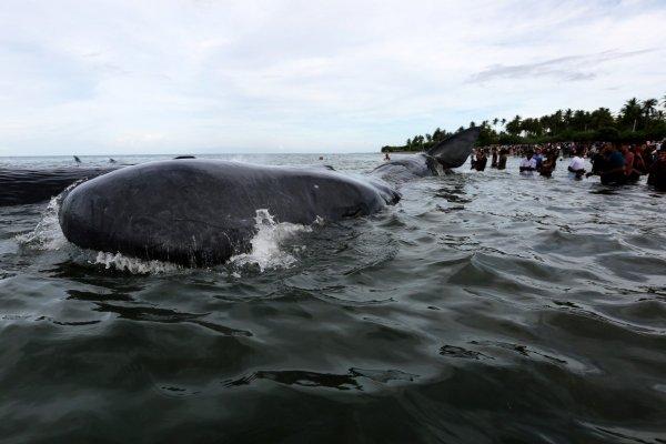 «Словно в ужастике»: Акула напала на отдыхающих китайского острова