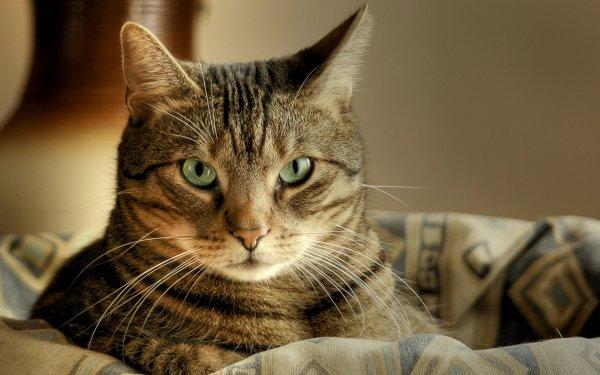 В Ростове из супермаркета украли кошку Лемошу