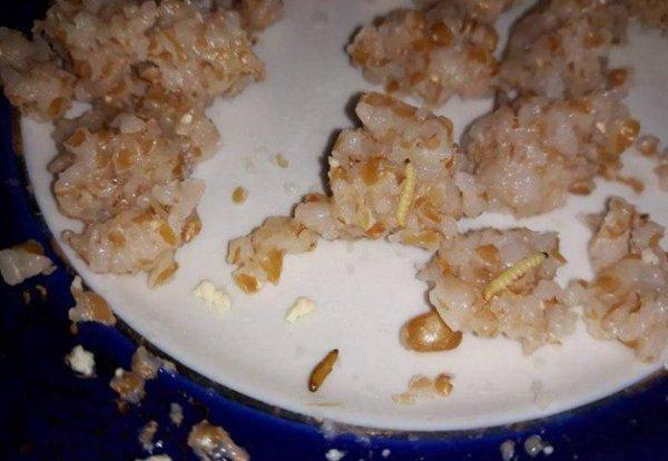 В детсаду Мариуполя детей кормили кашей с червями
