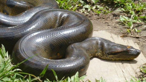 У автовокзала в Новочеркасске нашли большую змею
