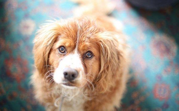 Живодёры убили собаку на глазах у детей в Воронеже