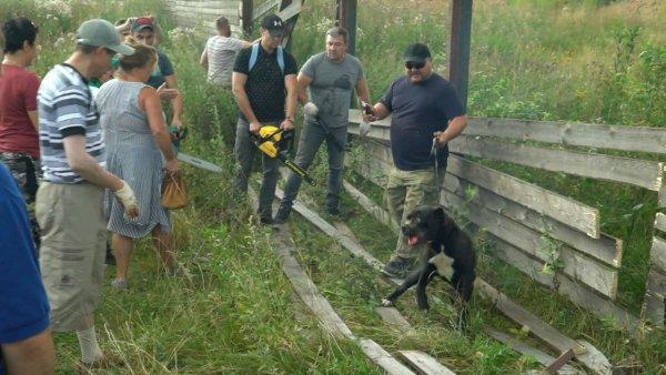 Подмосковная резня бензопилой: В Дмитровском районе пострадала собака при сносе забора