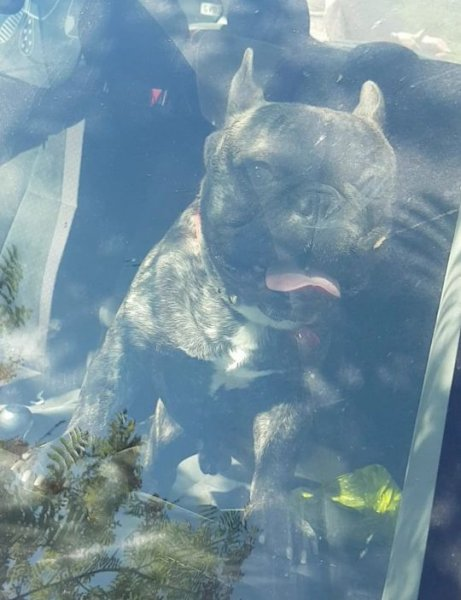 В Англии мужчина запер пса в машине в 35-градусную жару