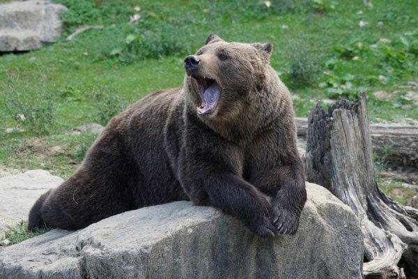 В Норильске пес спас хозяина на даче от лап медведя