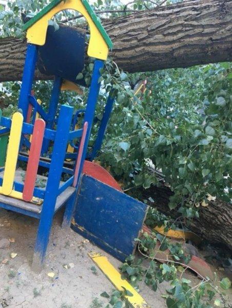 Упавшее в Ростове дерево едва не лишило детей жизни