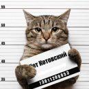 Обошлось без жертв: В Сеуле кот-поджигатель попытался продолжить дело сородичей-убийц