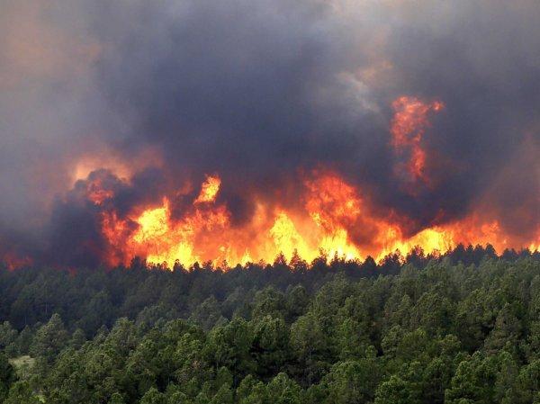 Возле Ялты горит лесной заповедник площадью 19 гектаров