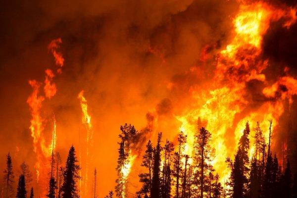 В Крыму сняли на видео пожар в лесу-заповеднике около Ялты