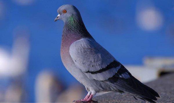 В Новосибирске жители напуганы мертвыми птицами