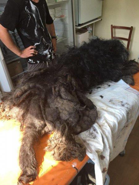 На Украине поймали ужасную чупакабру