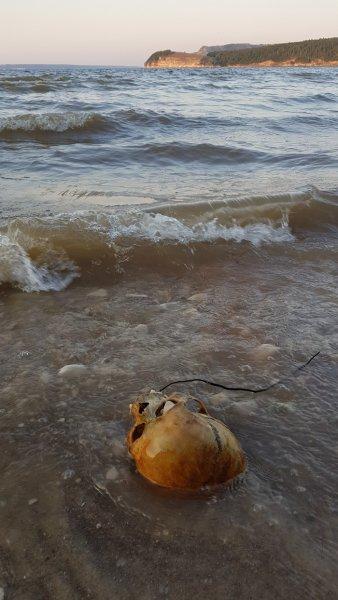 Издалека долго несёт скелет Волга: Под Самарой люди купаются в останках древнего кладбища