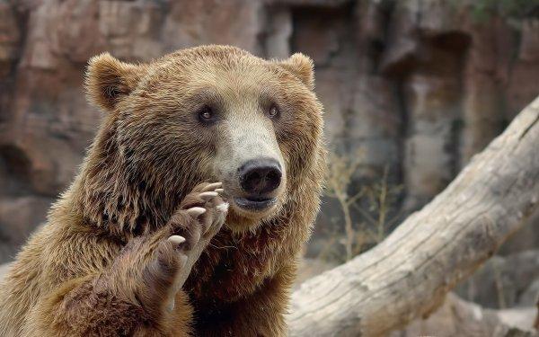 В Якутии ищут медведя с канистрой на голове