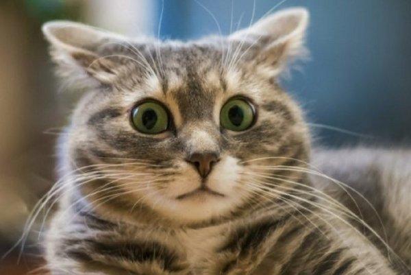 Женщина пойдет под суд из-за упавшего на голову прохожему кота