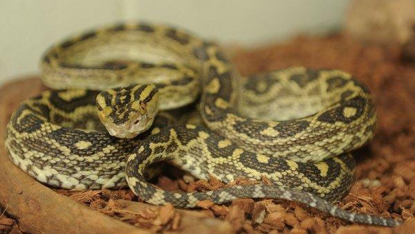 В Шереметьево изъяли 20 змей у прилетевшего туриста