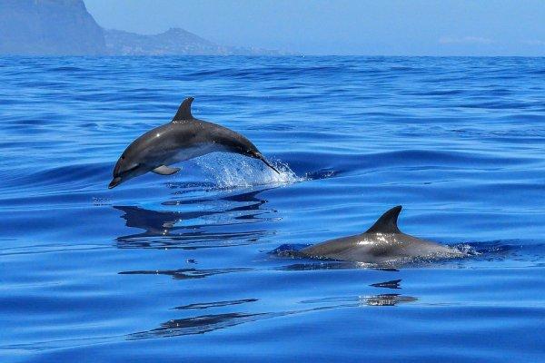 В Австралии на берег выбросились дельфины и кит
