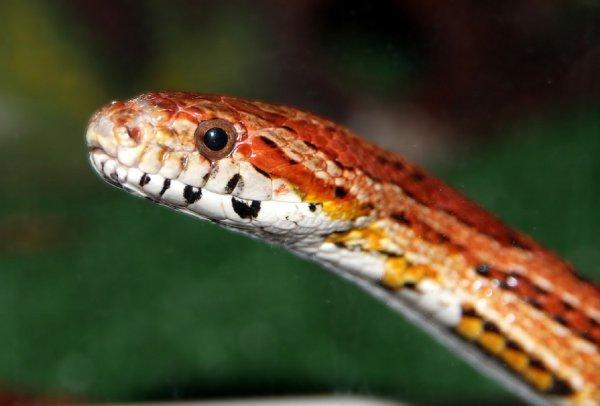 Жительница Воронежа заметила змею в душевой